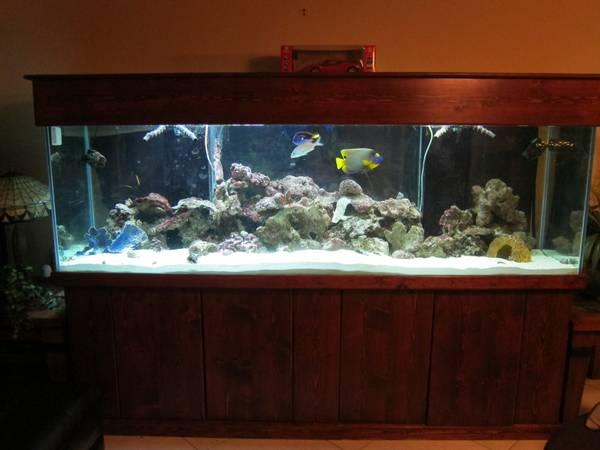 Giant aquariums tanks 300gal by trifisher page 6 for Fish tanks craigslist