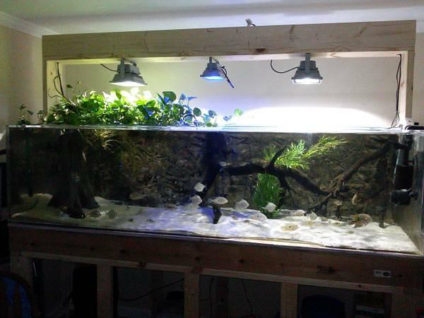 350 gallon acrylic aquarium for sale 1800 grassy creek for Acrylic fish tanks for sale