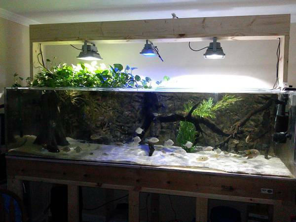 350 Gallon Acrylic Aquarium For Sale - $1800 (Grassy Creek, Virginia)
