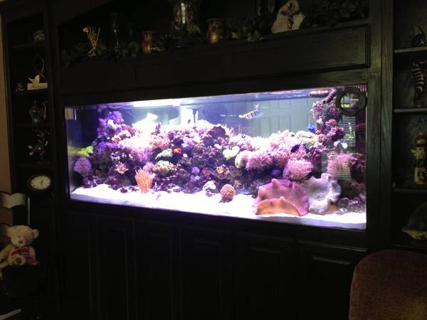 340 Gallon In Wall Reef Aquarium - $5000 (Lewisville, Texas)