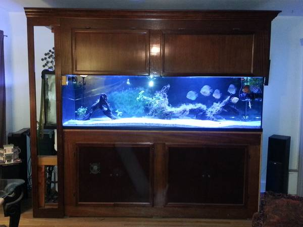 300g Glass Reef Ready Aquarium - $1500 (Loma Linda,Ca)