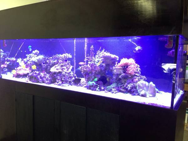 500gal. Aquarium for Sale- SALT WATER - $8000 (Corpus Christi, Texas)