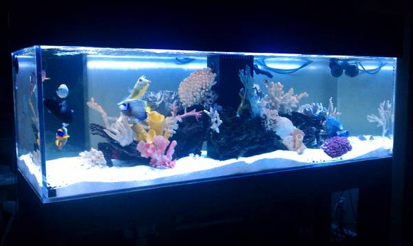 Giant aquariums tanks 300gal by trifisher for Spring water for fish tank