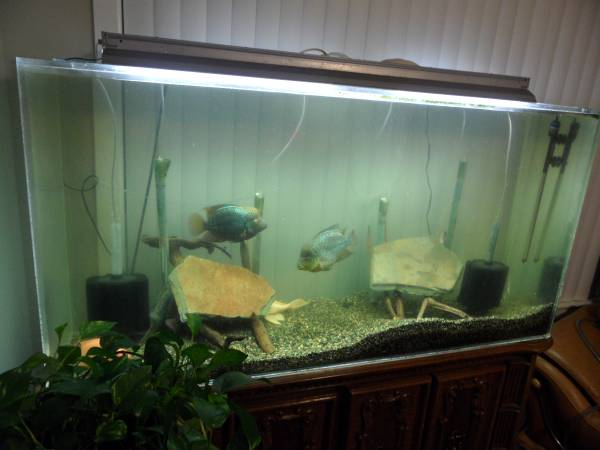 Giant aquariums tanks 300gal by trifisher for How to build an acrylic fish tank