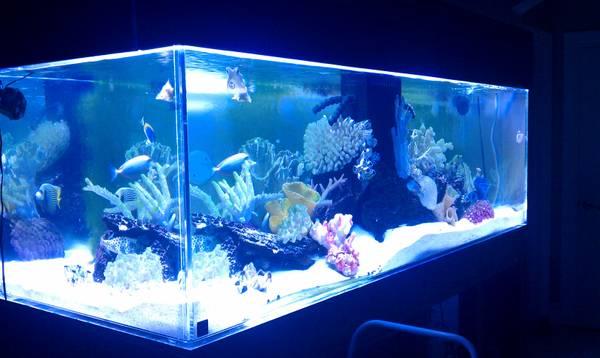 Giant aquariums tanks 300gal by trifisher page 7 for Blue fish aquarium