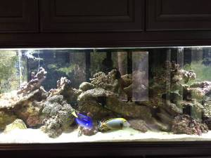 Giant aquariums tanks 300gal by trifisher page 8 for Used fish tanks for sale on craigslist