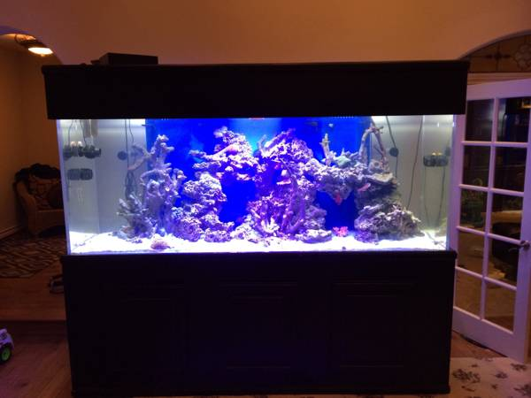 January 2015 giant aquariums for Used fish tanks for sale on craigslist