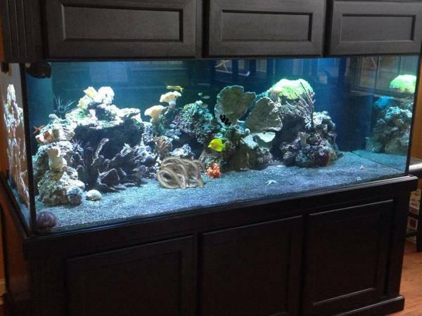 01111_cvKvgCCd23Z_600x450. Marineland ... & 300 Gallon Deep Aquarium Stand u0026 Canopy u2013 $2800 (MurfreesboroTn ...