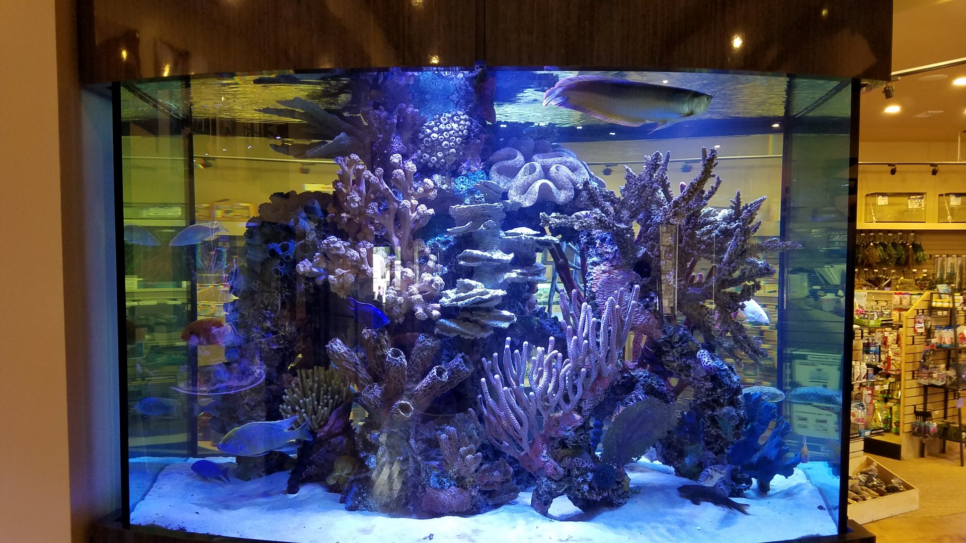 Freshwater aquarium fish dallas - Freshwater Aquarium Fish Dallas