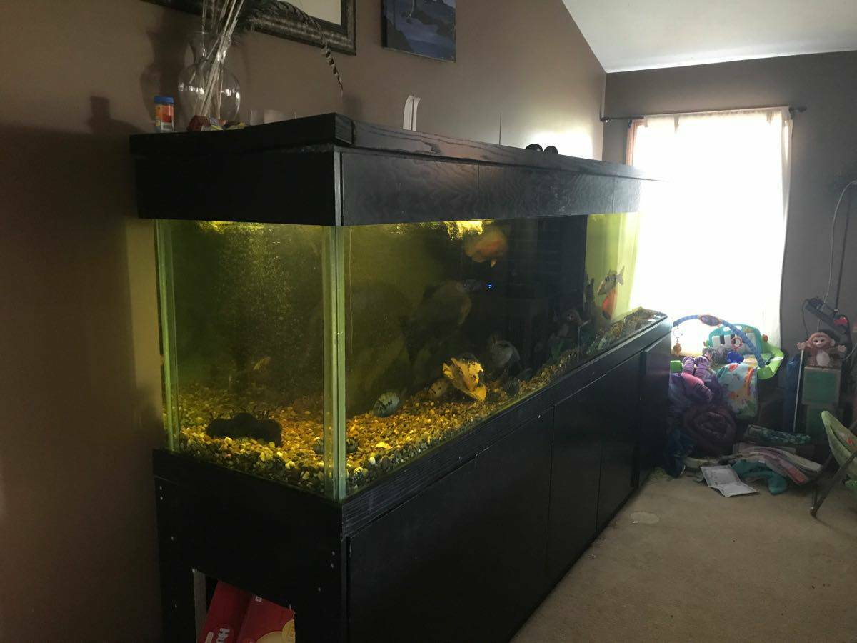 360 gallon aquarium fish tank with fish 1500 huron for Used fish tanks for sale on craigslist