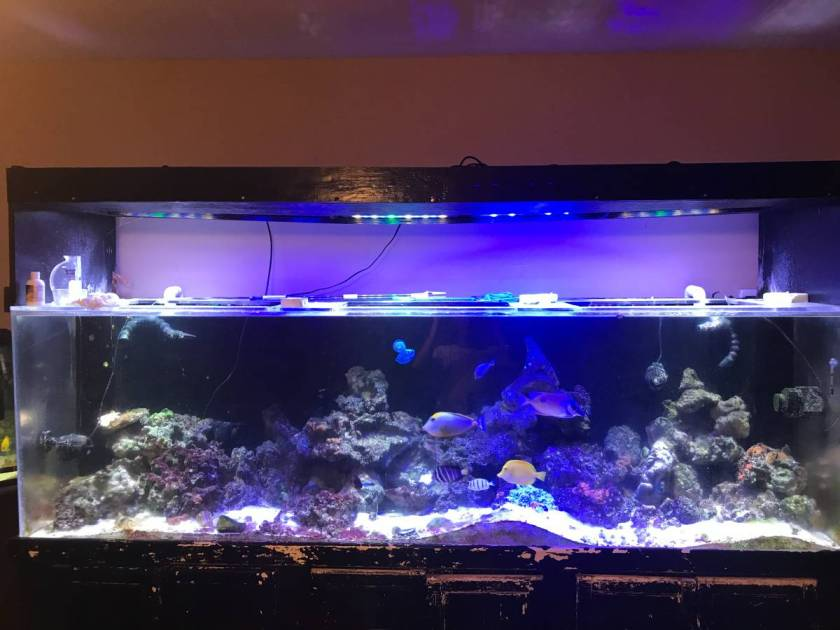 Page 9 giant aquariums for Used fish tanks for sale on craigslist