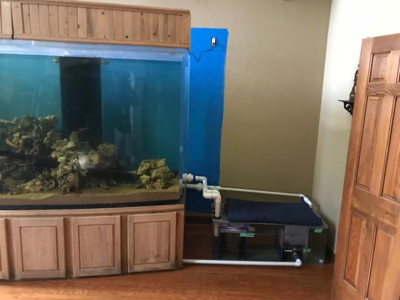 giant aquariums | Tanks 300gal + by Trifisher | Page 2